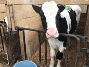 広野肉牛生産組合(有)