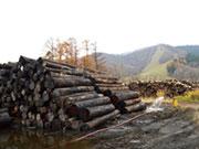 新得木材工業(有)
